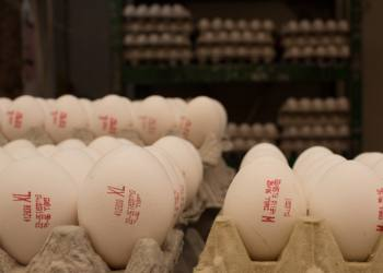 Barcodes that say XL and M size eggs written on cartons of eggs in Mahane Yehuda Market in Jerusalem on May, 12 2013.  Photo by Sarah Schuman/ Flash90 *** Local Caption *** ??? ???? ????? ????? ?????